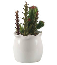 Buy Green Cactus Look Artificial Plant with Glossy Finish Pot pot online