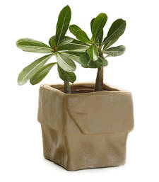 Buy Brown Square Ceramic Planter Pot with a Crumpled look pot online