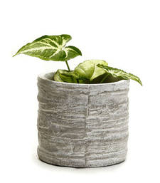 Buy Round Cement Pot with a Rough Finish pot online