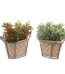 Buy Set of 2 Artificial Leaves Plant with Pot flower online