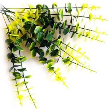 Eucalyptus Shaded Leaves
