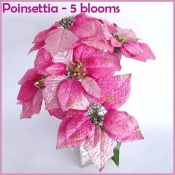 Poinsettia Bunch Pink - 5 flowers bunch