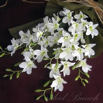 Bunch of White Orchids