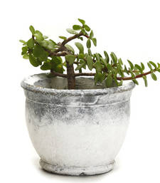 Buy Mortar Design Stone Finish Stone Planter Pot pot online