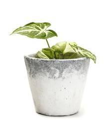Buy Conical Shape Stone Finish Stone Planter Pot pot online
